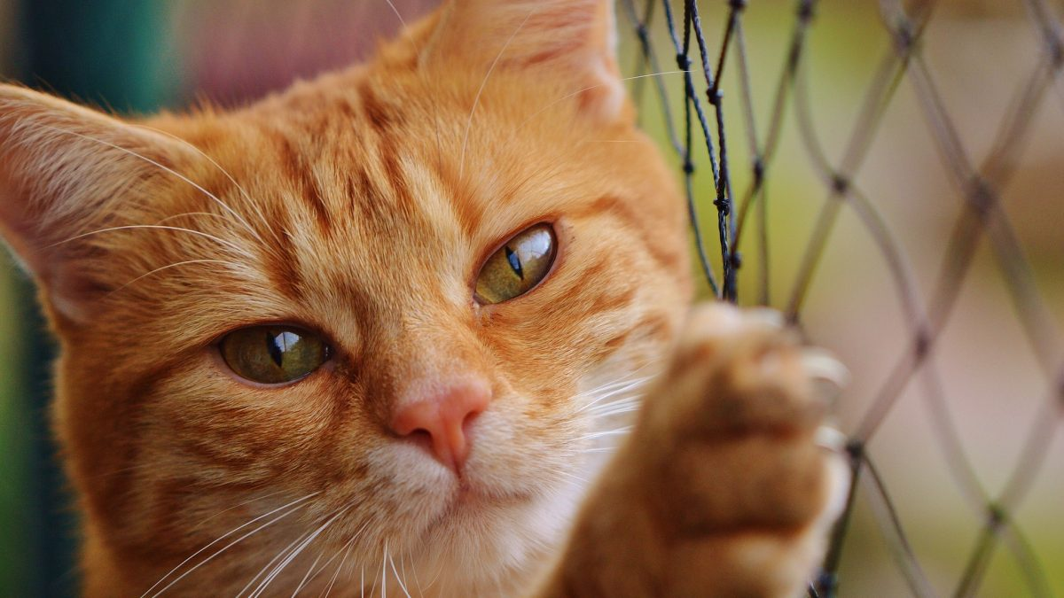 Diabetul la pisici. Cauze si simptome