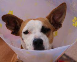 Urgentele veterinare: Cand sunam la medicul veterinar?