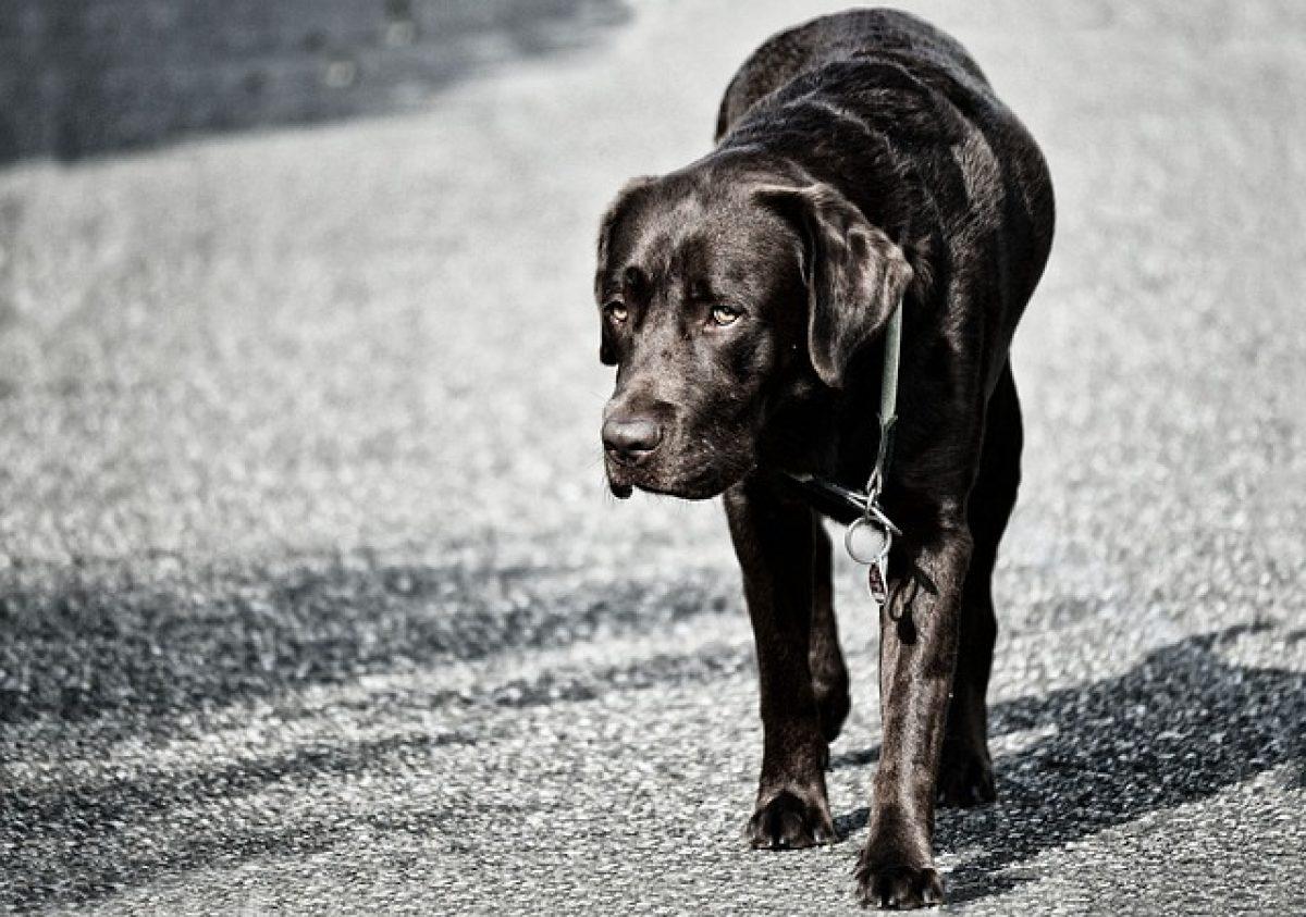 boala articulației câinilor