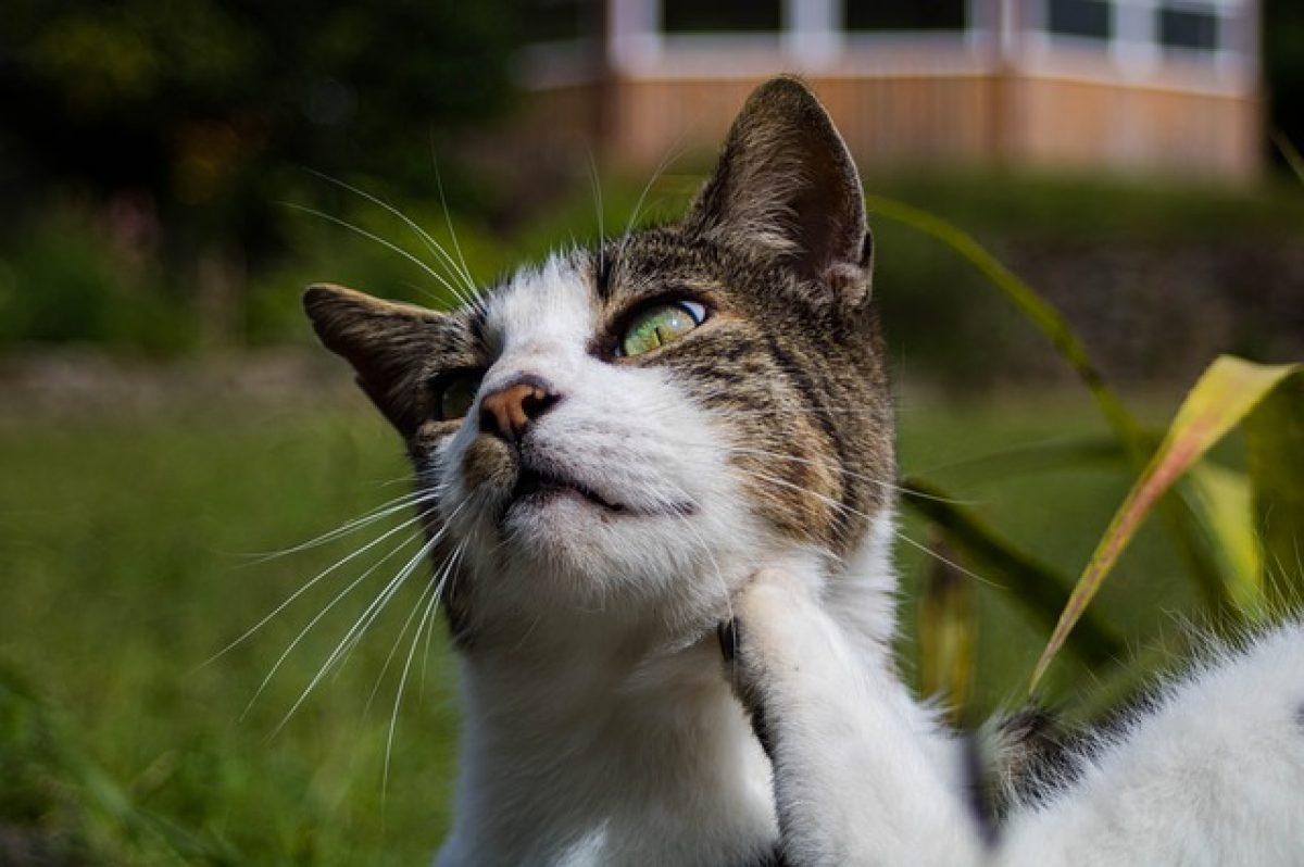 tratament raie la pisica ce copii sunt folosiți pentru tratarea viermilor
