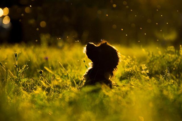 Capusele si Babesioza. Cum sunt afectati cainii?