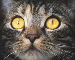 Toxoplasmoza si Pisicile: Ce este, cum se trateaza si ce facem pentru a o preveni?