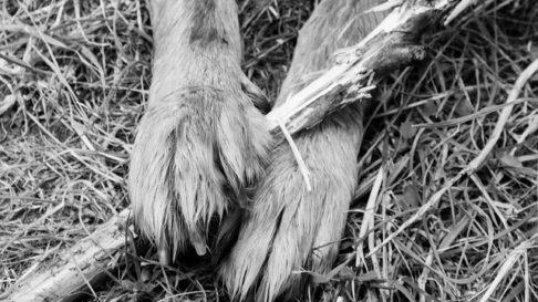 Aristele – Spicele de iarba de care trebuie sa iti feresti animalul pe timp de vara