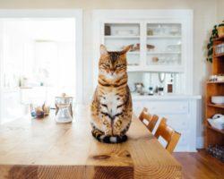 7 Comportamente ciudate ale pisicilor, care pot ascunde semnele unei boli