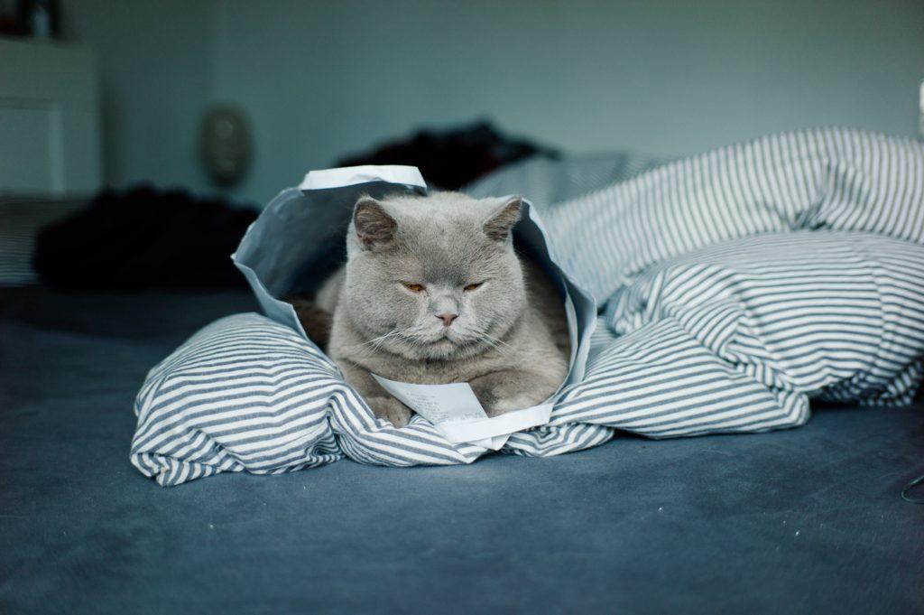 stabileste limite pentru pisica