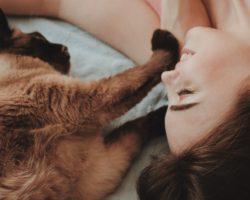 Cum sa iti pregatesti pisica pentru un bebelus