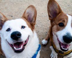 Castrarea si sterilizarea cainilor: Importanta, riscuri si recomandari