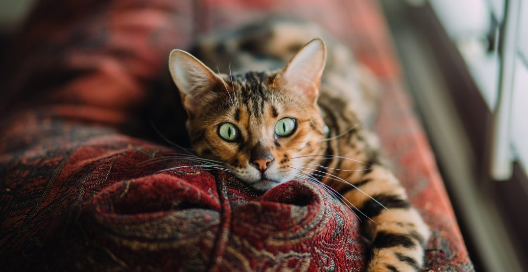 Tumorile mamare la pisici – Simptome, Tipuri si Preventie