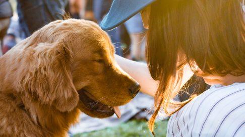 Primul ajutor pentru animale – 6 situatii de urgenta pentru care sa fii pregatit!