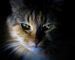 Virusul leucemiei feline (FeLV) – Ce trebuie sa stii despre el