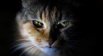 pierdere în greutate de felină veche)