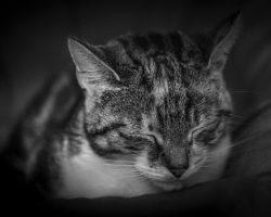 Rinotraheita la pisici – Cauze, Simptome si Tratament