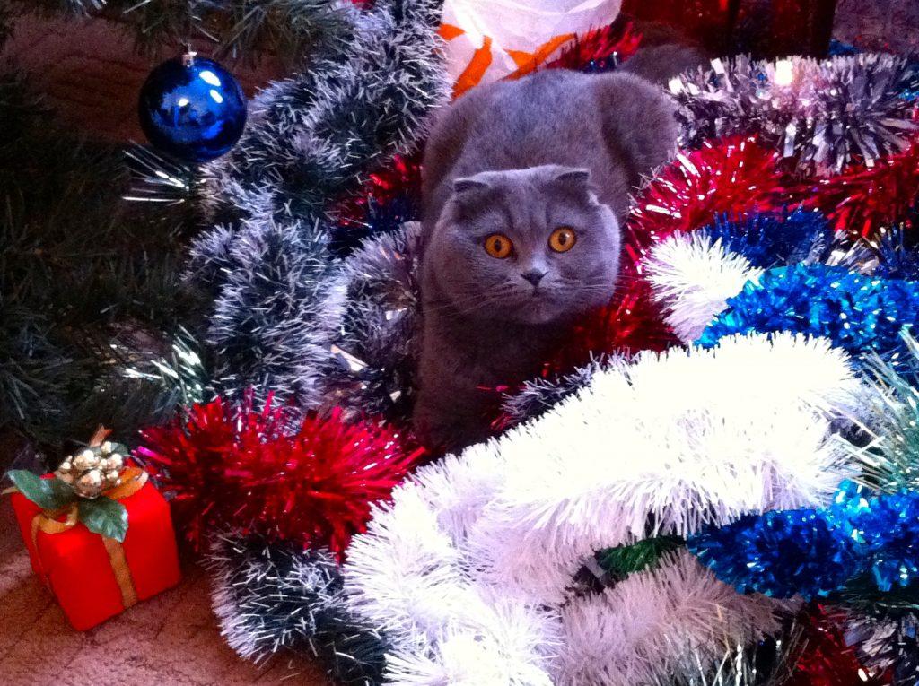 pisicile si decoratiunile de craciun